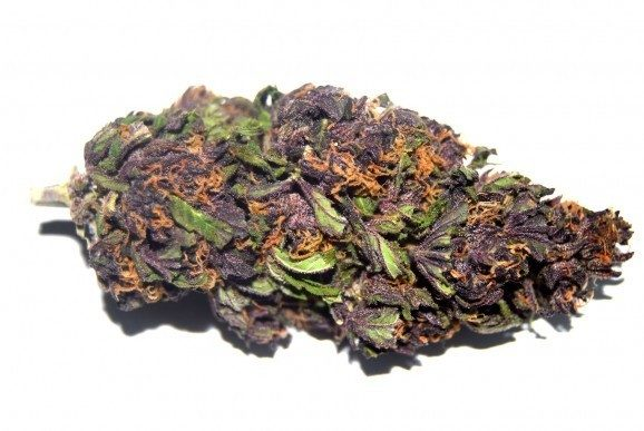 Purple Haze-578x387.jpg