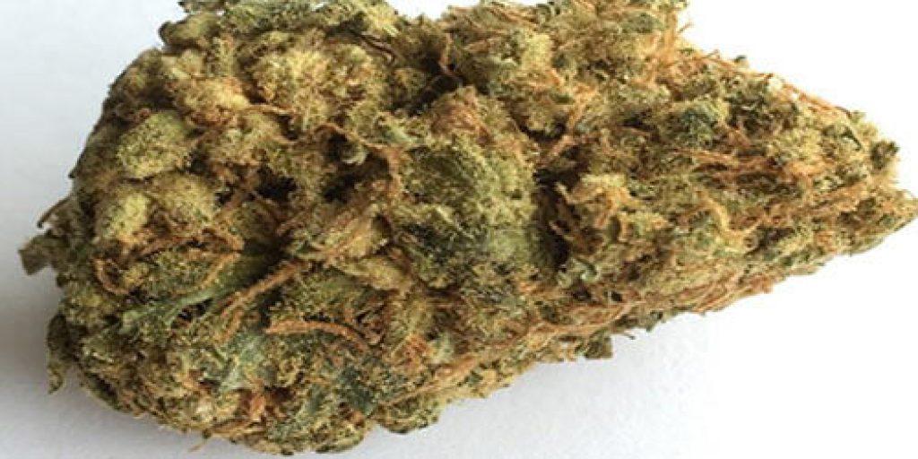 Moby-Dick-weed-strain.jpg