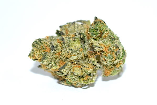 girl-scout-cookies-cannabis-strain-review.jpg