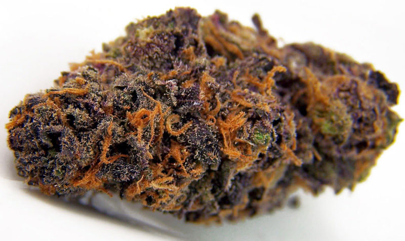 Purple-Kush-Cannabis-Bud.jpg