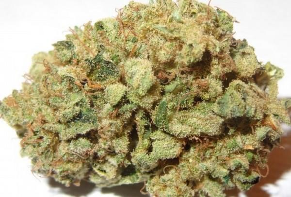 blueberry-marijuana-strain-3.jpg