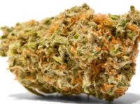 Alaskan-Thunder-Fuck-Marijuana-Strain-3.png