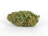 northern-lights-marijuana-3.jpg