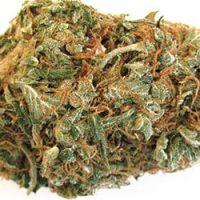 Jack-the-Ripper-weed.jpg
