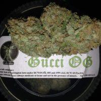 gucchi stickey.jpg