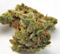jillybean-marijuana-strain-3.jpg