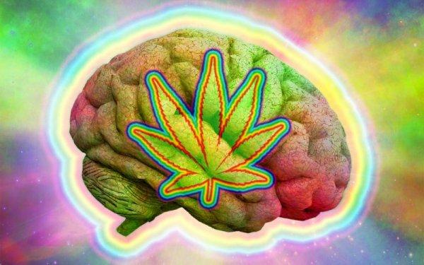 え、本当!?マリファナのCBDが抗鬱効果を促す