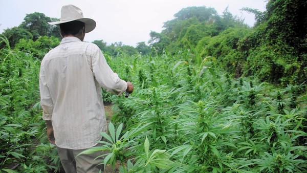 la-la-fg-mexico-marijuana-01-jpg-20151229