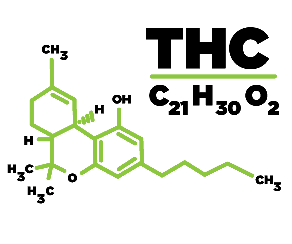 thc-trans