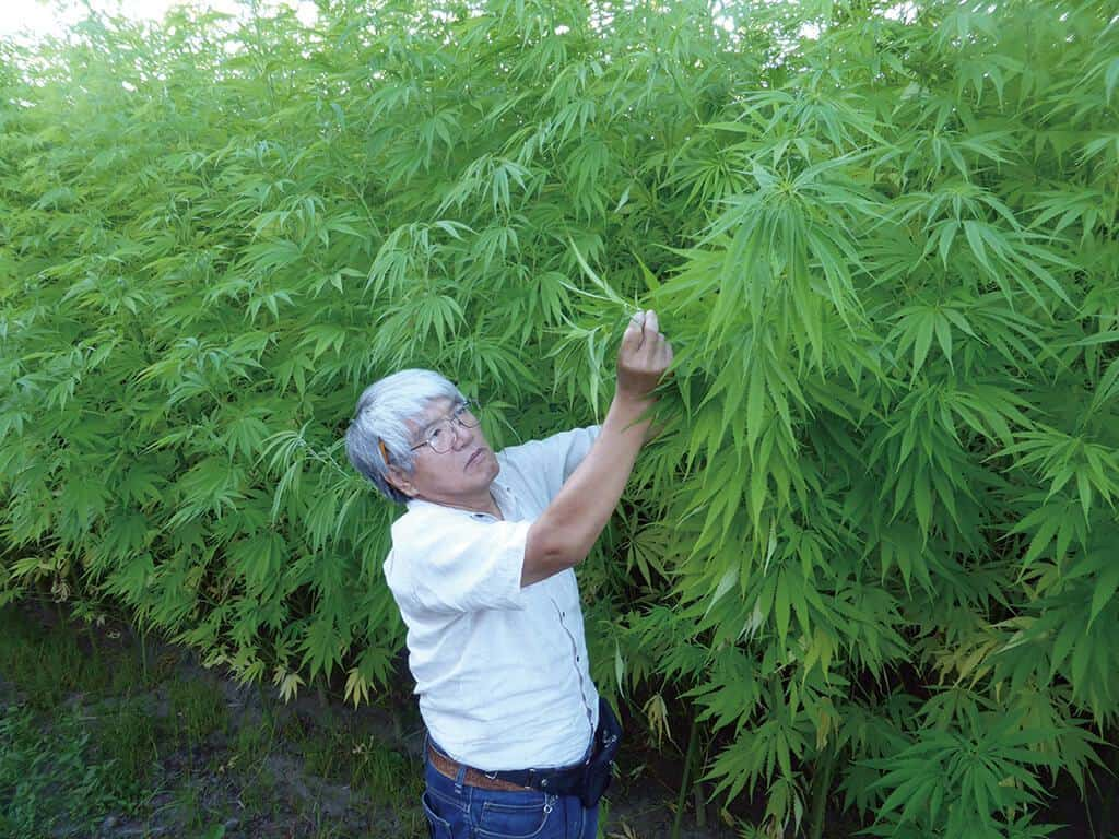 日本の麻文化を支えてくれている重要人物「お米から大麻へ」