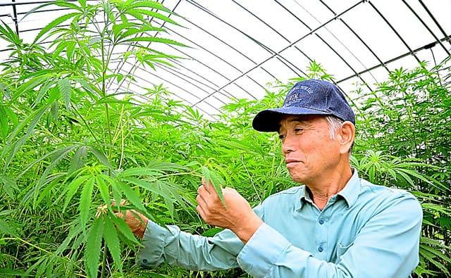 みんなで日本麻農家を盛り上げよう!重要人物その1