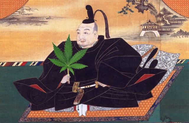 徳川家康も愛用!日本に元々大麻しかなかったって本当!?
