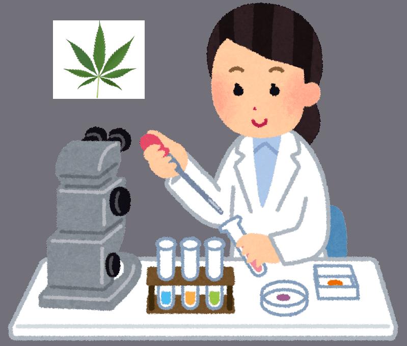 【薬物検査】大麻のTHCは体内にどれくらい残るの?