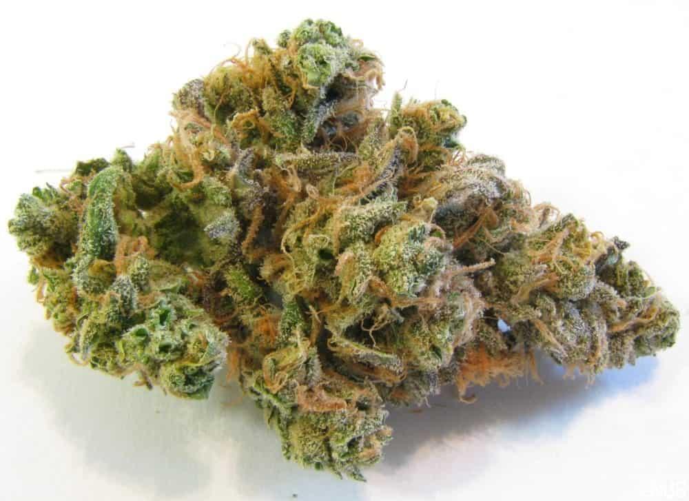 ブルードリーム:多くの医療大麻患者が好む大麻株