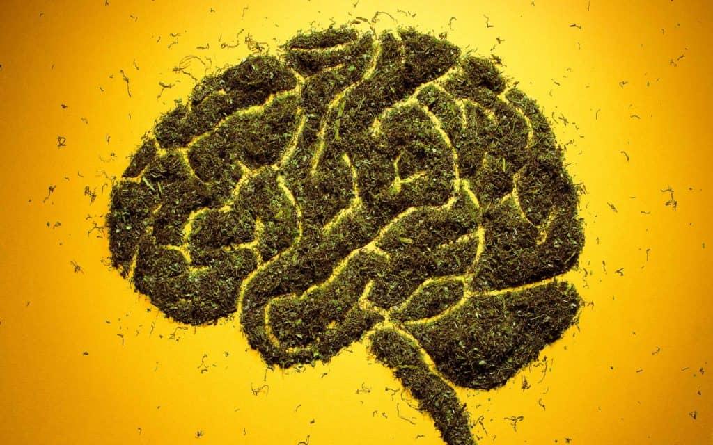 驚きの実話!大麻が悪性脳腫瘍をやっつけた