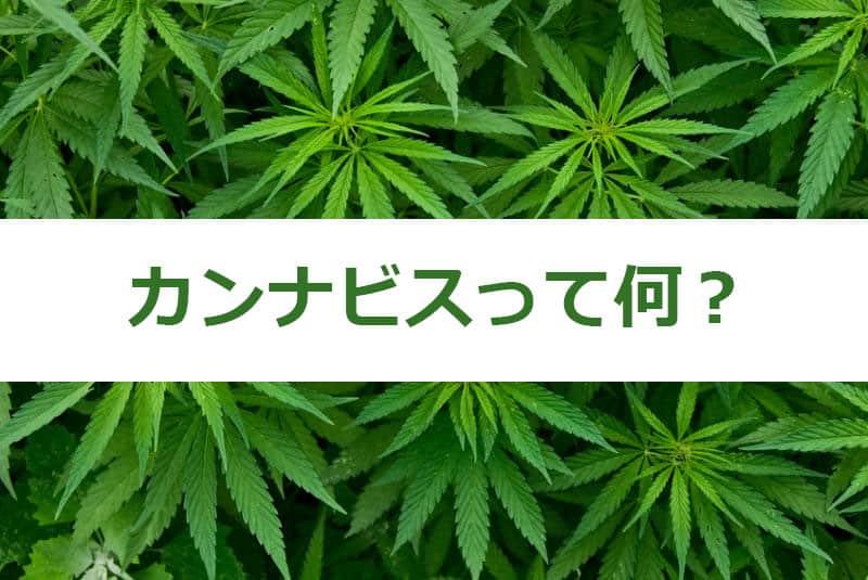 カンナビスって何?ー大麻呼び方全集付きー