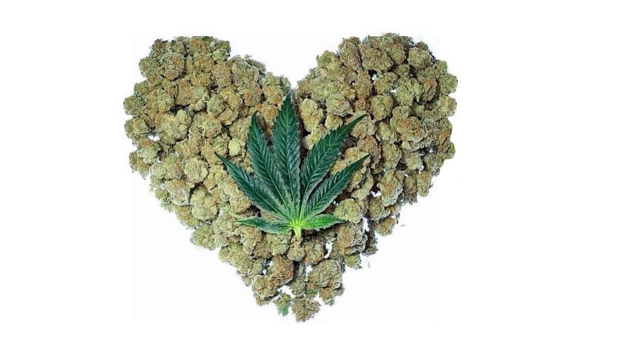医療大麻101:カンナビスは心臓にどう影響するの?
