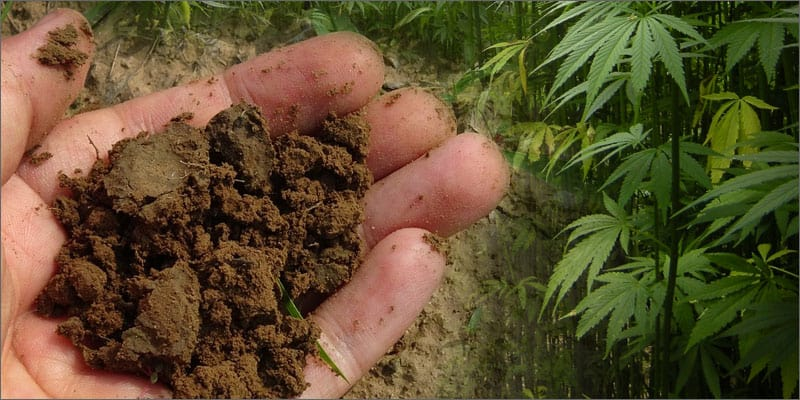 日本もやるべき!イタリア式の土壌汚染除去!?