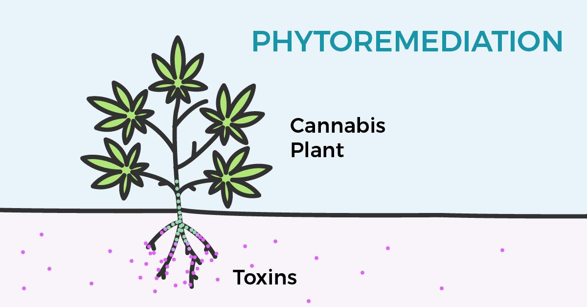 phytoitaly