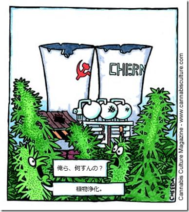 phytoremediation.jp