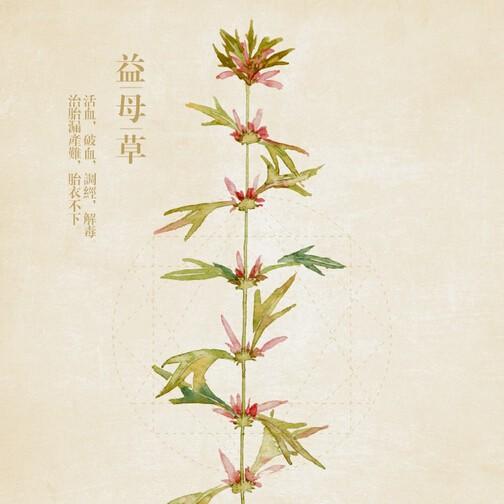 chinesemotherwort