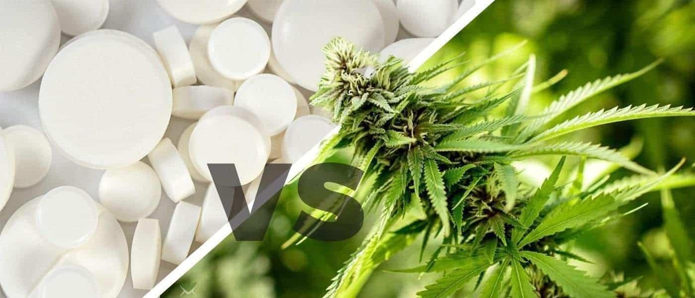 痛みを和らげる!大麻 vs オピオイド鎮痛薬 ~あなたの薬は大丈夫?~