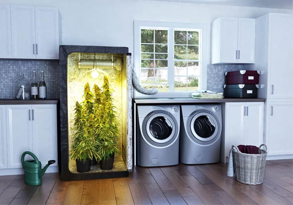 大麻栽培:バレない対策と逮捕されない方法