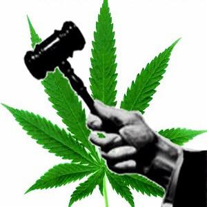 judge_weed