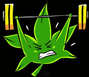 weedsportd