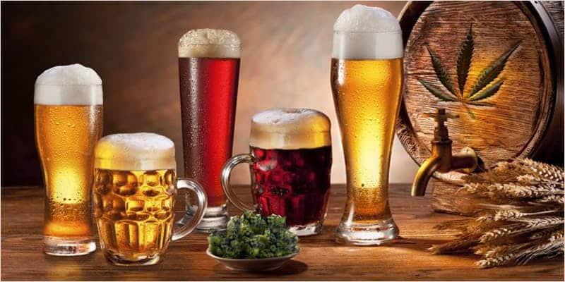 「日本じゃ無理・・・!?」【大麻ビール醸造所】9選