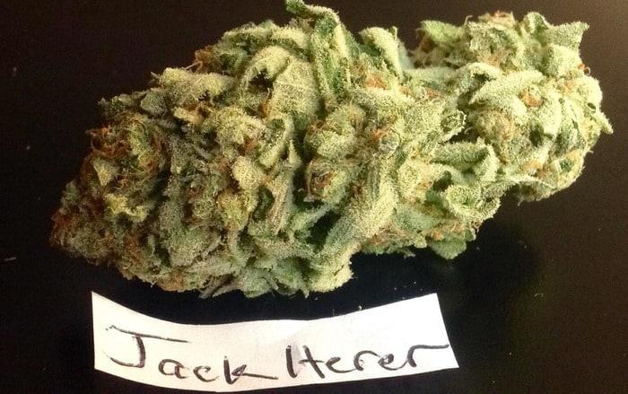 ジャック ヘラー