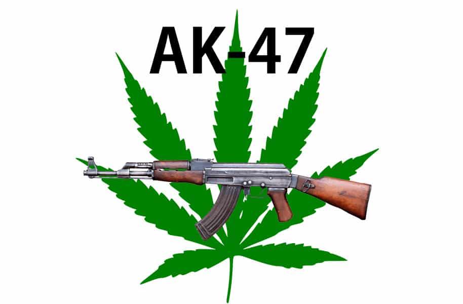 「オランダで定番の大麻!」AK-47(エーケーフォーティーセブン)