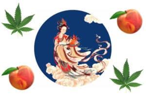 「麻の神様!?」古代アジアを癒した麻の女神【麻姑】