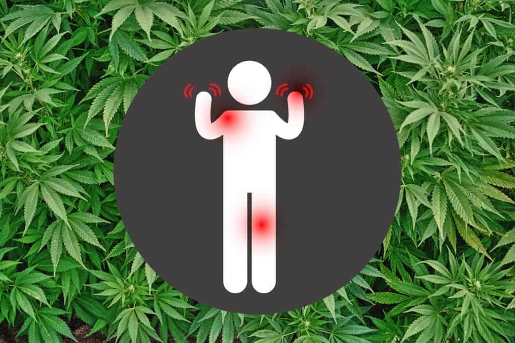 【難病と医療大麻】優しく和らげ治療する!「多発性硬化症(MS)」