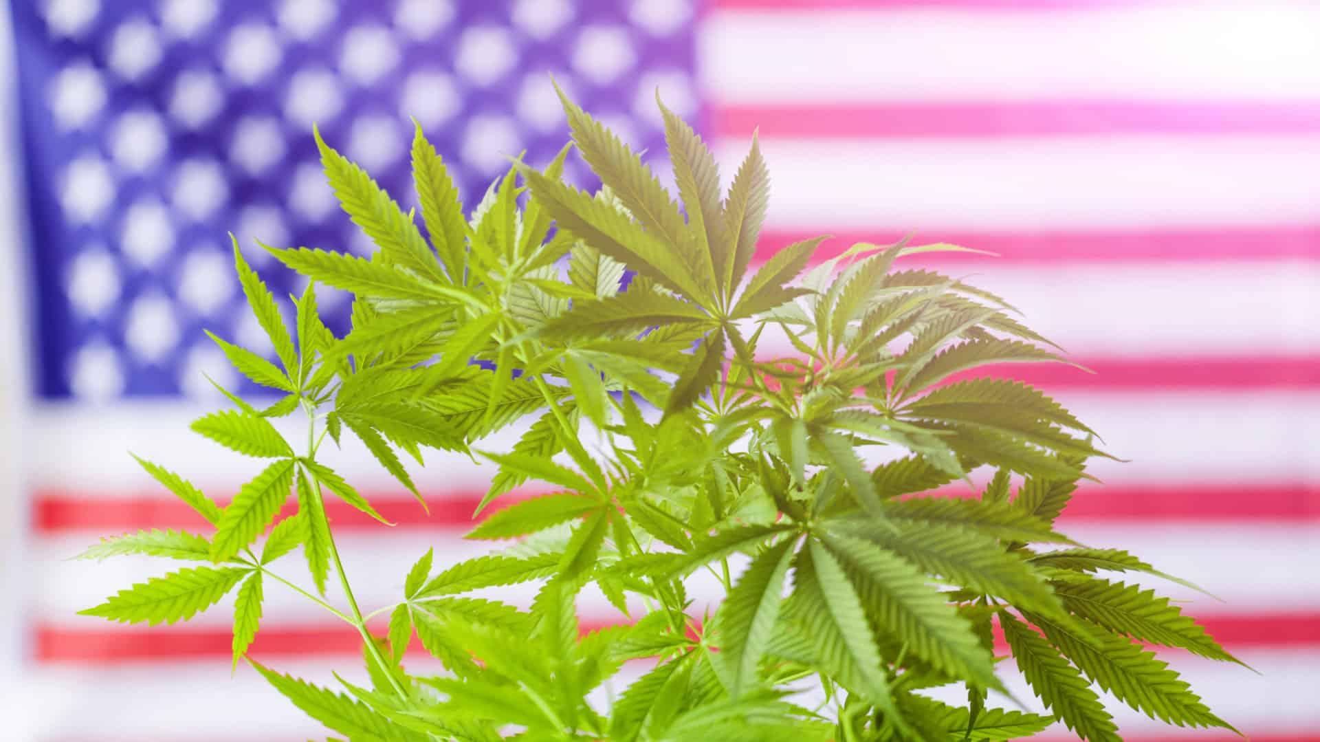 レクリエーション(嗜好/娯楽用)大麻【合法な州とその法律】