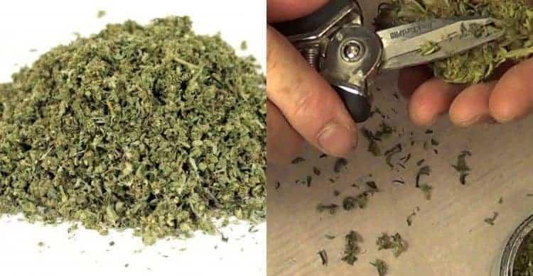 大麻(マリファナ)の切れ端「シェイク」は買うべきか・・・?