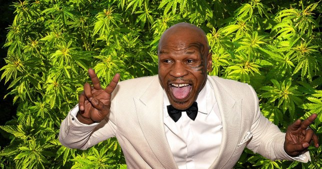 【マイク・タイソン大麻業界参入!】月に吸う大麻の量がヤバすぎ・・!?