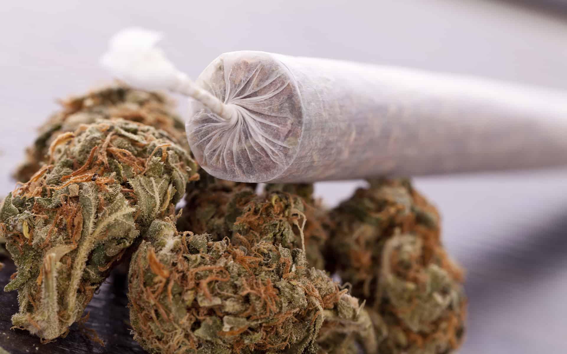 大麻の巻き方「裏返し巻き(バックワード)」ーゆっくり燃えるジョイント!?ー