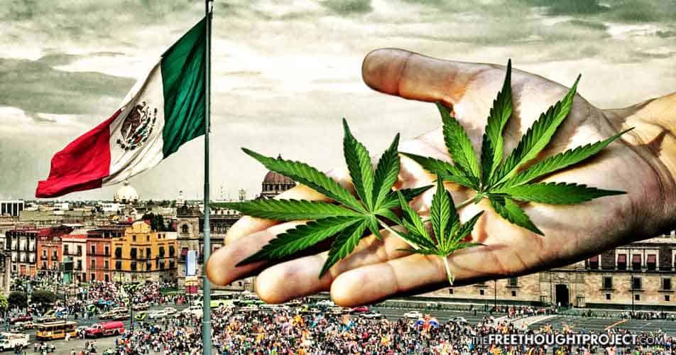 【メキシコ x 大麻】大麻とメキシコの重要3点!?