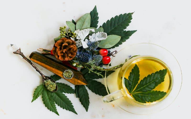 【大麻の匂い/香り】大麻を買う時に匂いは嗅ぐべき!?